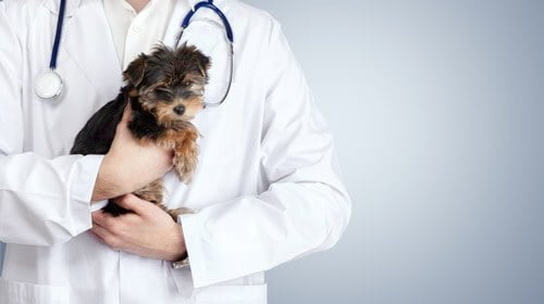 ペットが病気になったらすぐに動物病院へ向かおう